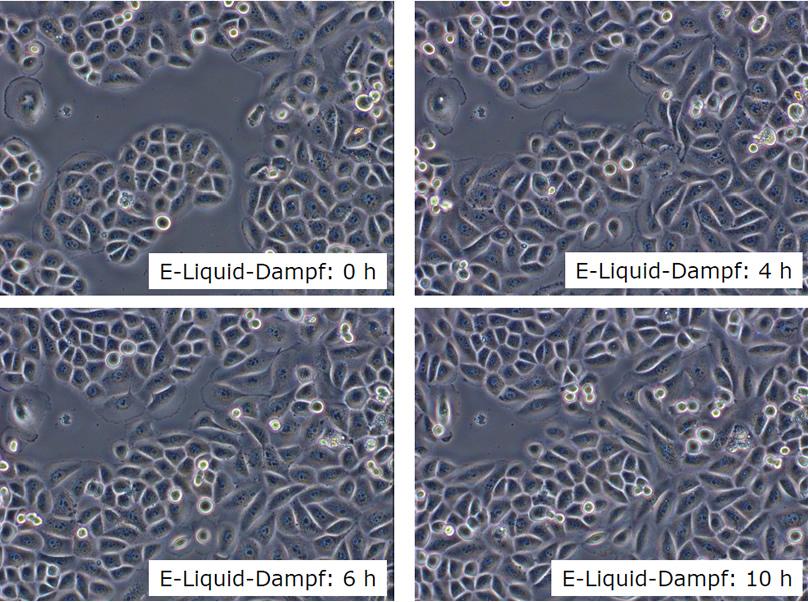 Lungenzellen Liquid Dampf