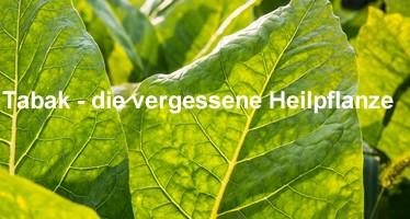 Heilpflanze Tabak
