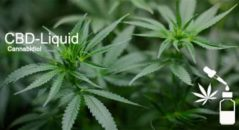 CBD-Liquid: Was steckt hinter dem Trend?